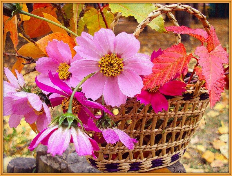 Осенние цветы-хоть ярки,но просты...  Фото автора t-casiczina на Яндекс.Фотках