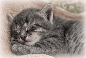 Спит котенок сладко-сладко