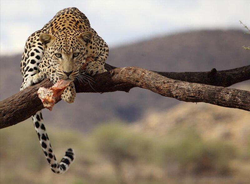 Животный и растительный мир Африки