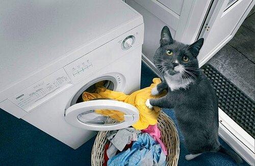 Идеальный кот