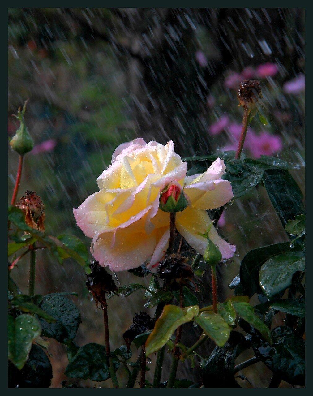 ...каждая погода благодать...