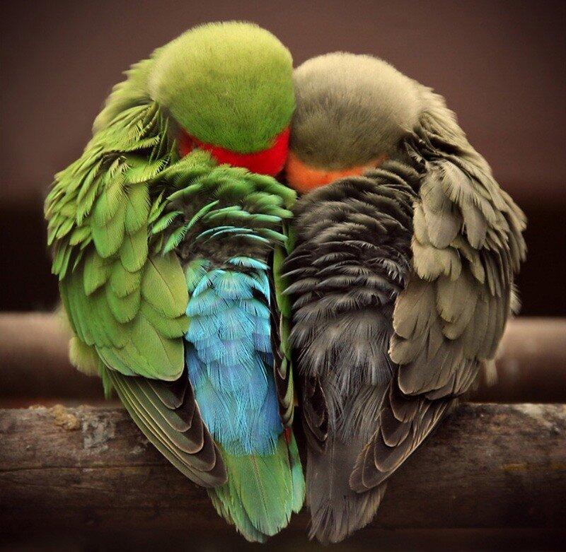 Девушке, картинки смешные спокойной ночи птицы