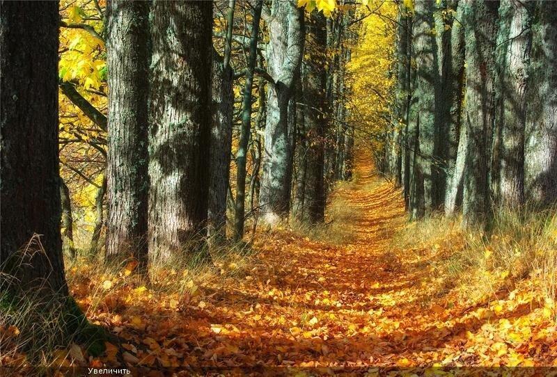 Осенние фотографии, фото Rudens Pieskārien