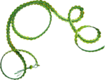 Holliewood_Topiary_Ribbon3.png