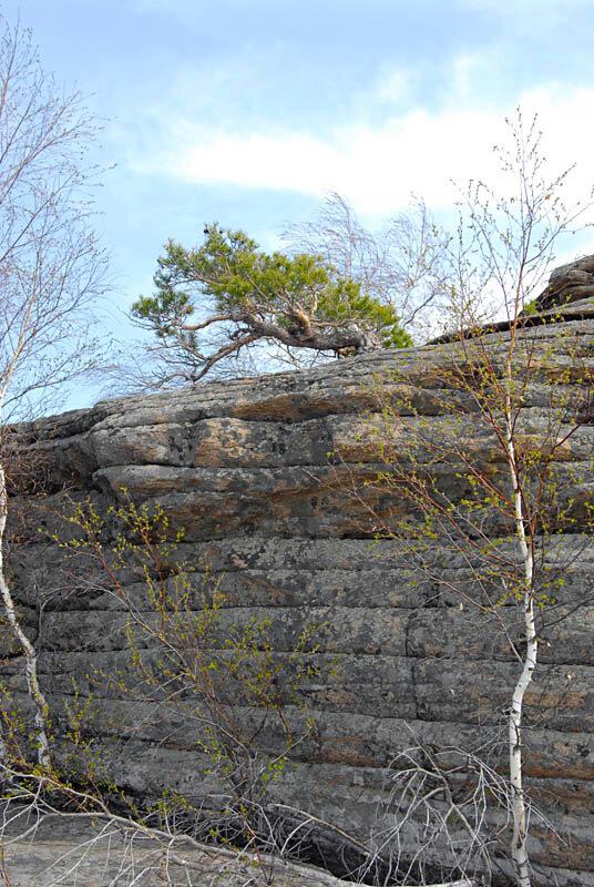Из расщелин растут редкие виды можжевельников (01.11.2013)