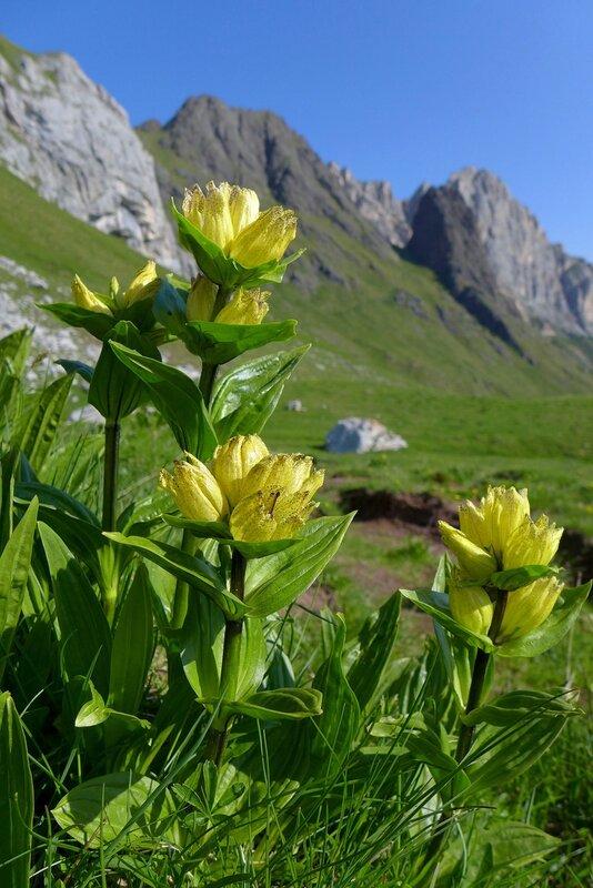 Альпийская зелень