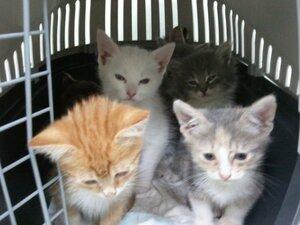 Москва. HELP! Семь котят из коробки нуждаются в помощи!