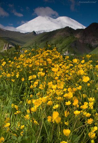 цветущие луга под Эльбрусом