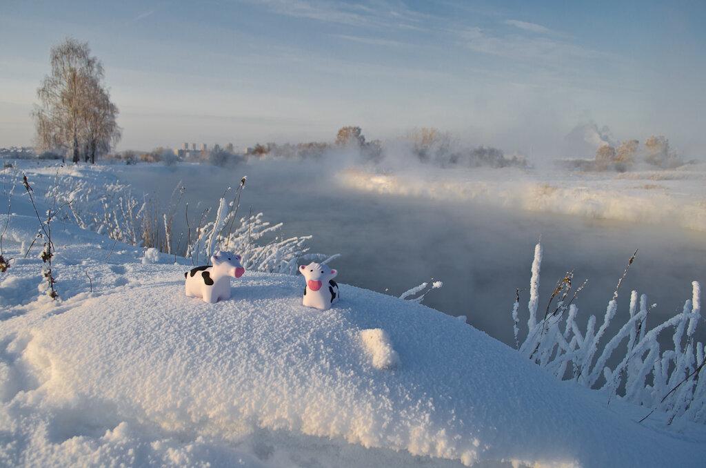 Образцы фотографий с Никон Д5100 КИТ 18-55 ВР. Снежные коровы на Урале