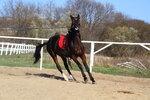 021113 почти избранное кони