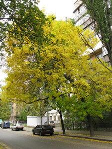Чарівне поєднання зеленої і жовтої листви