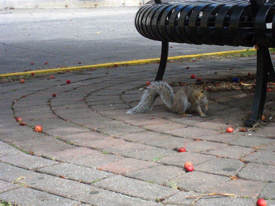 эти ваши яблочки  - я не ем!