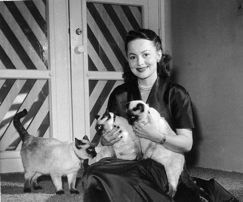 Знаменитости и животные. Olivia de Havilland