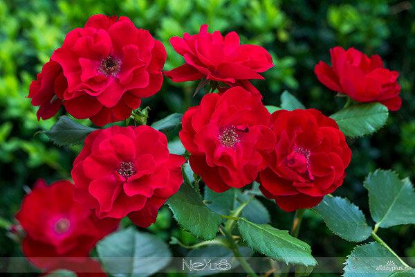 Я люблю все цветы, часть 62.