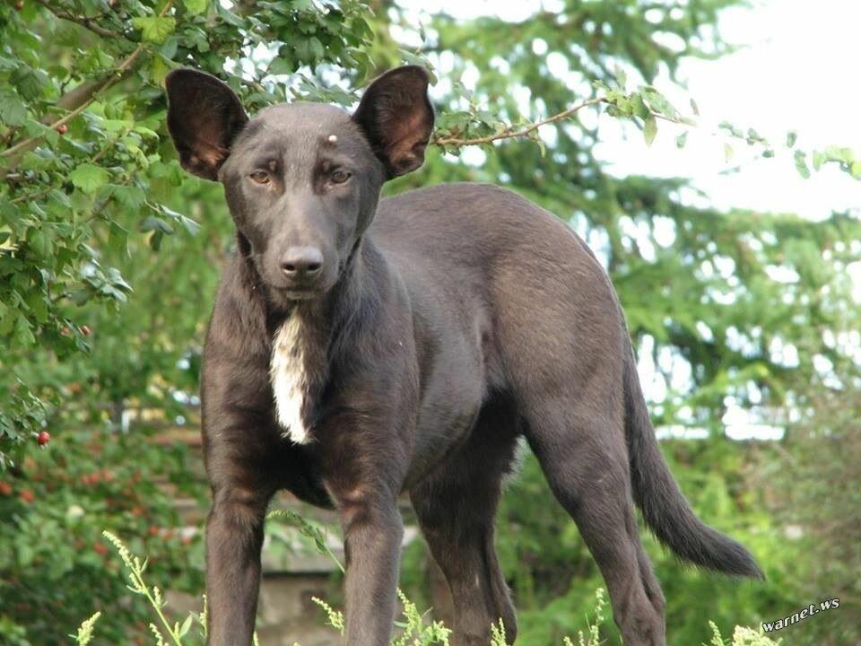 На Крещатике нашли собаку, похожую на Путин