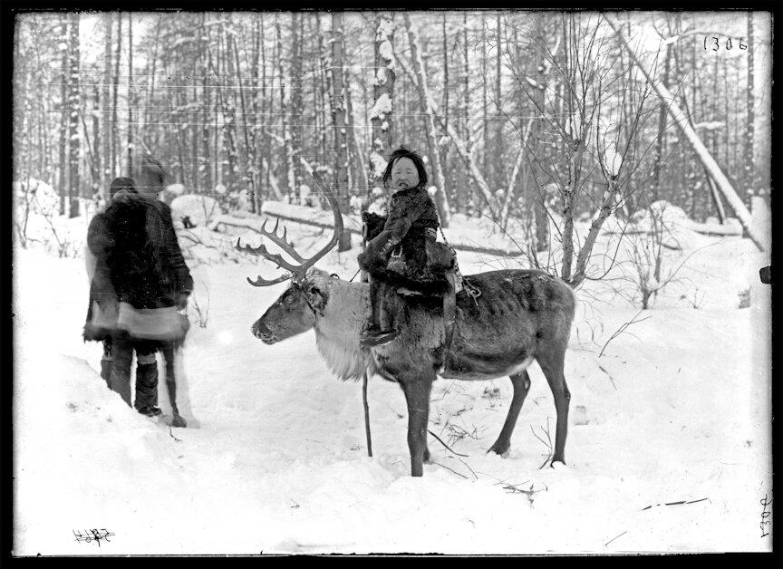 Девочка на олене, Марково, 1901
