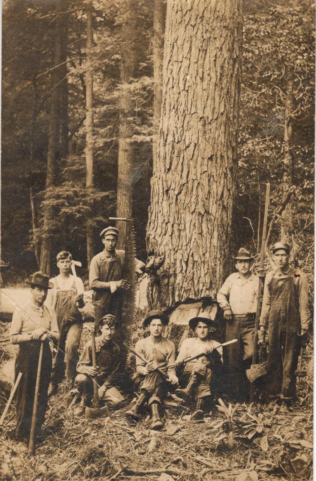 «Wilderness Lumber Company»