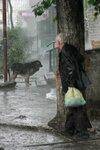 Ливень: собака и старик IMG_3826.jpg