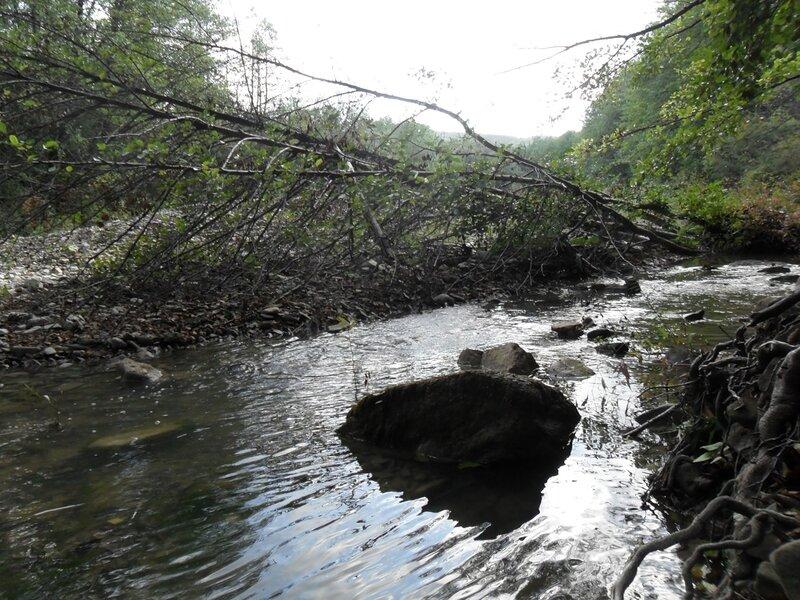 Лес, река, окрестности Горячего Ключа