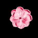 Palvinka_FlowerEssence_flower1ash.png