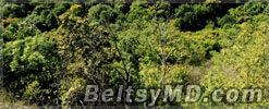 Молдова планирует расширить площадь лесов на 5%