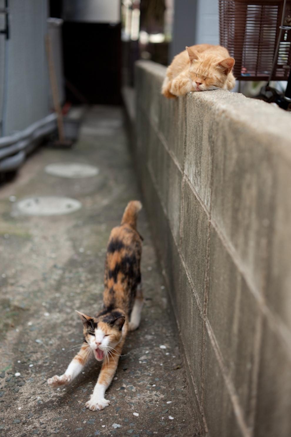 Фото 13 - Кошачий рай в Японии