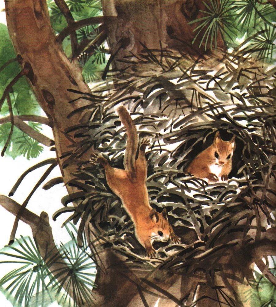 картинки из жизни диких животных николаева мешкова маме