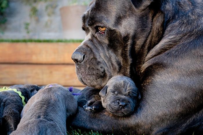 Эти собаки знают, что такое семья! (22 фото)