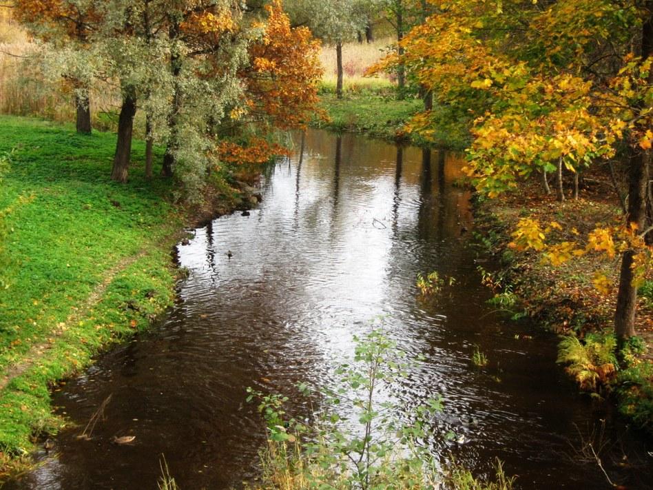 Река,утки1.jpg