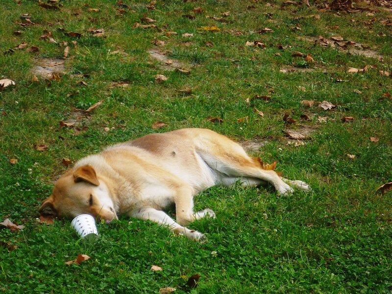 Собака в Стамбуле (Dog in Istanbul).