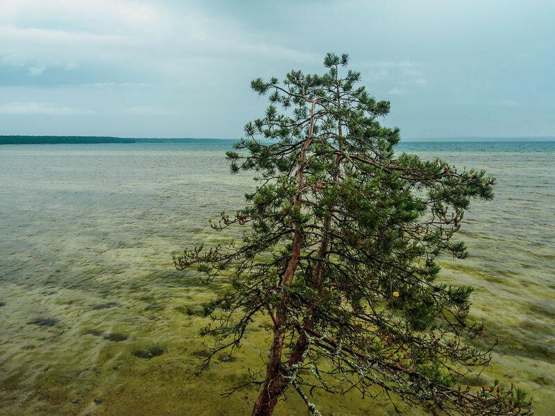 Некоторые деревья нависают прямо над водой