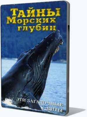 Тайны морских глубин. 2 Эти загадочные киты