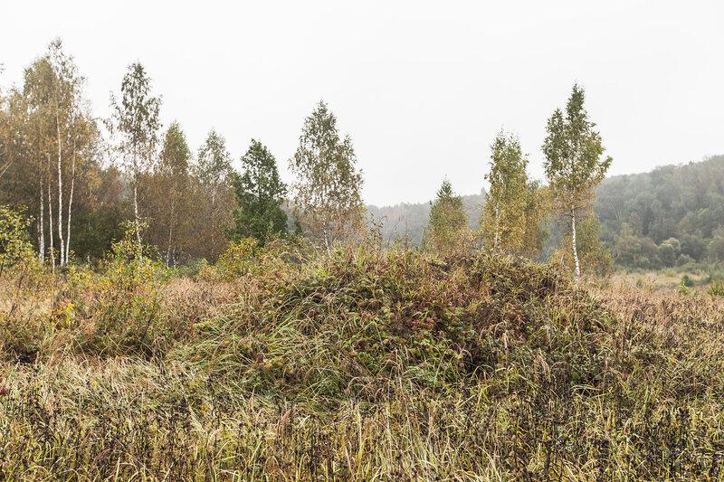 Курганы около городища Луковня