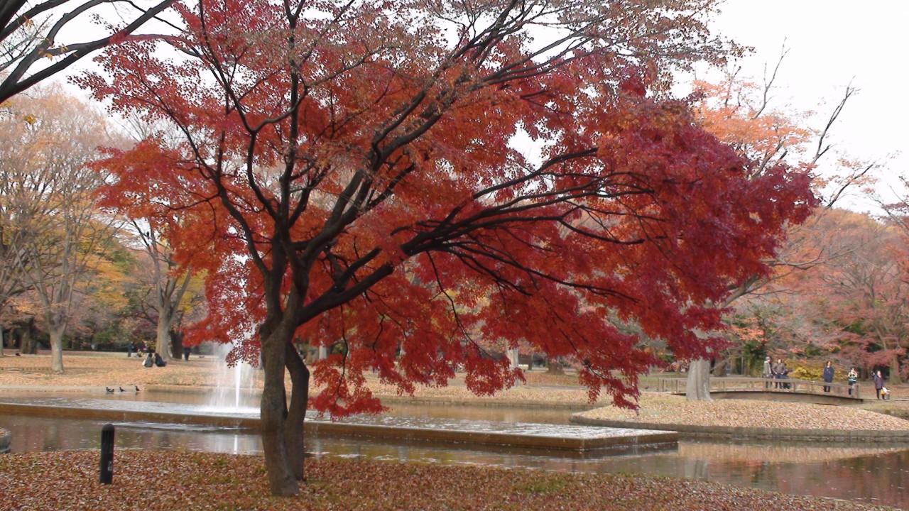 Осенний парк Йойоги, Токио