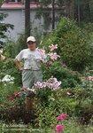 Anastasia (ОТ-гибрид). Моя лилия-дерево