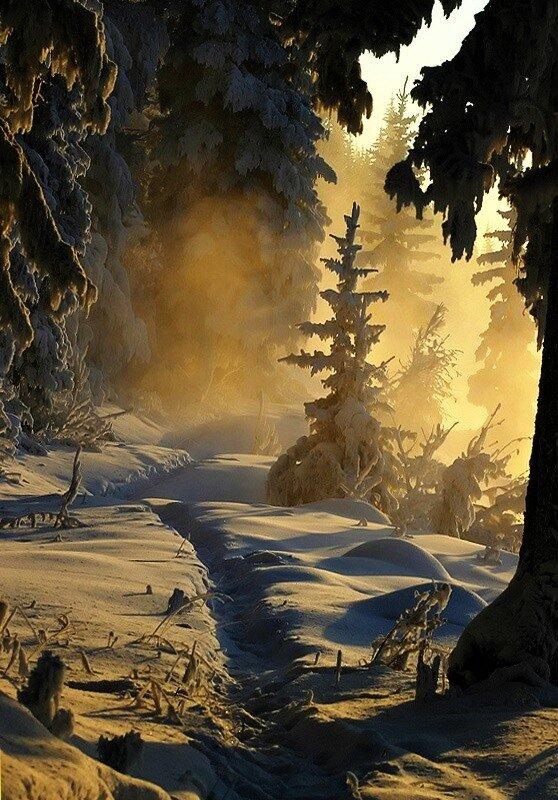 Зима.  Подборка красивых фотографий леса зимой.