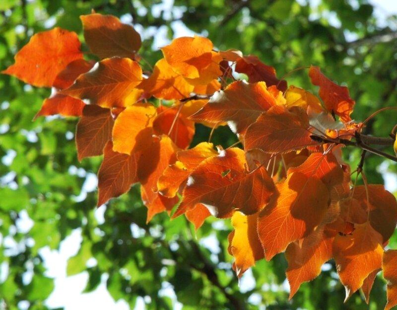 Так по ярким краскам скучаю, даже не по летне-весенним...