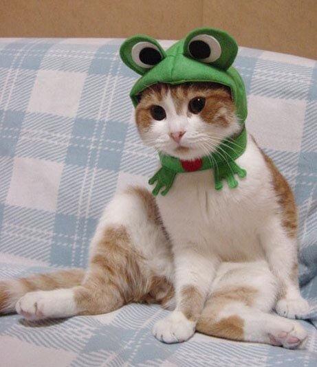 кошачьи костюмы