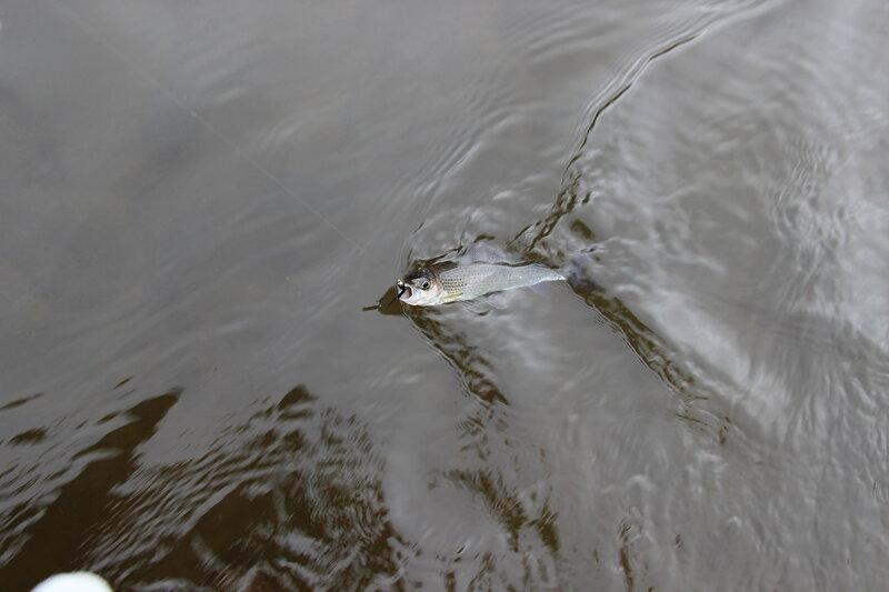 Был на днях на рыбалке... - Страница 6 0_117403_efa1348e_XL