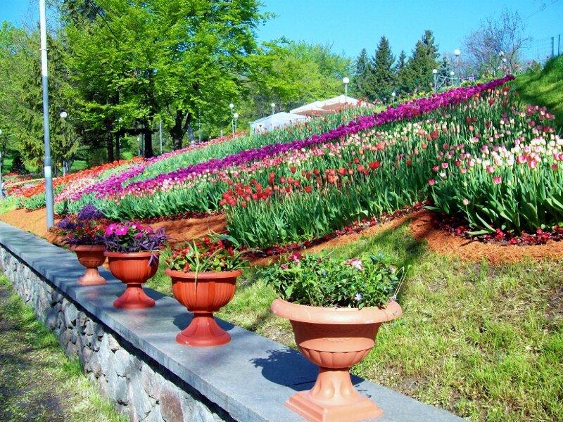 Вазоны с цветами на бордюре Певческого поля