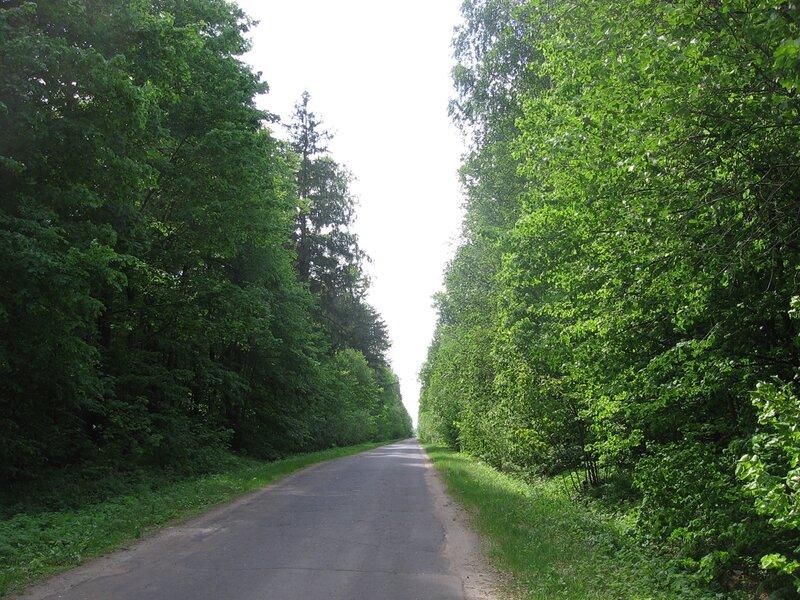 саров дорога летом