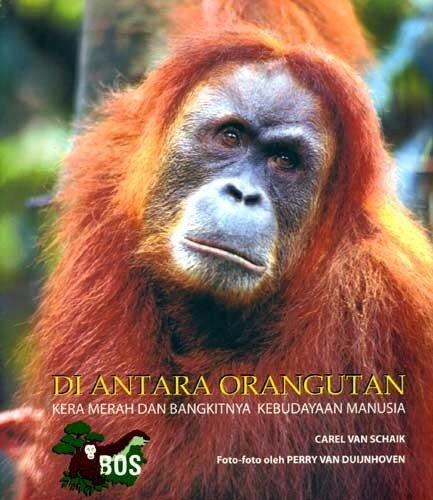 Орангутан: Шайк