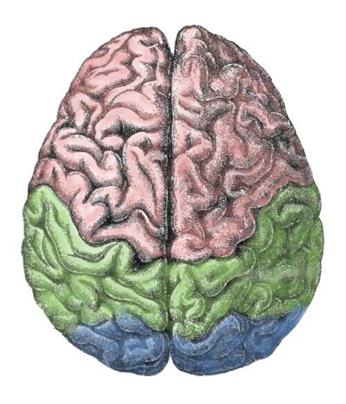"""""""Песня"""" мозга во время эпиилептического припадка"""