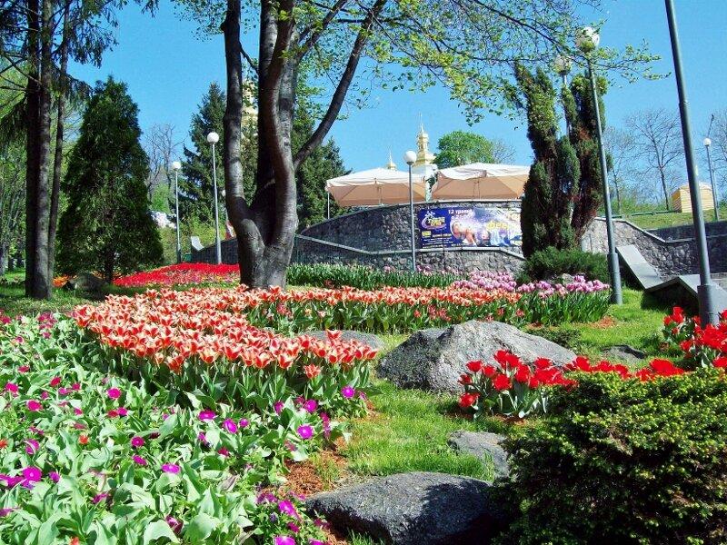 Часть экспозиции выставки тюльпанов