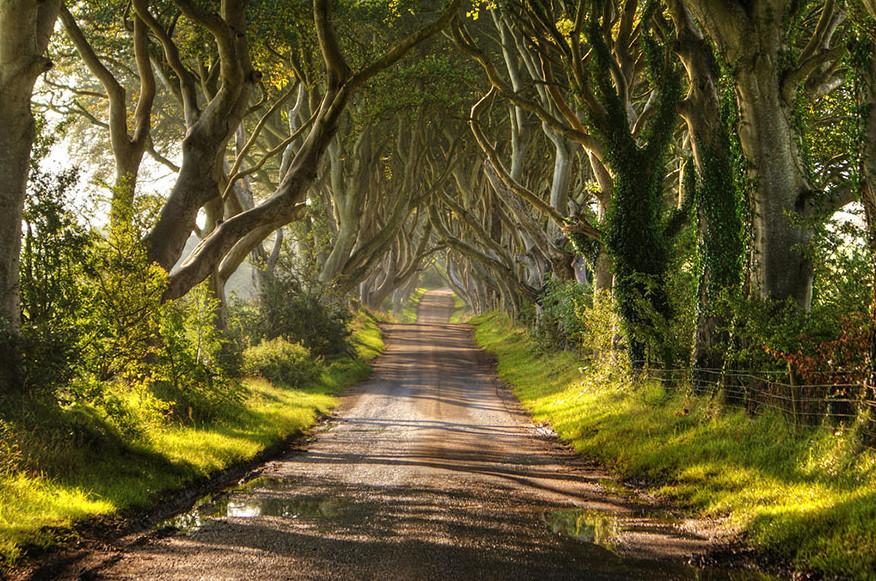 Зелёный тоннель в Ирландии