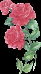 rosenrosa067.png