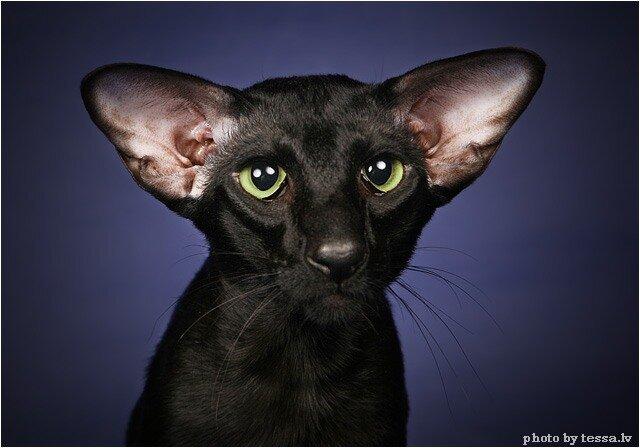 Египетские коты картинки - 699d
