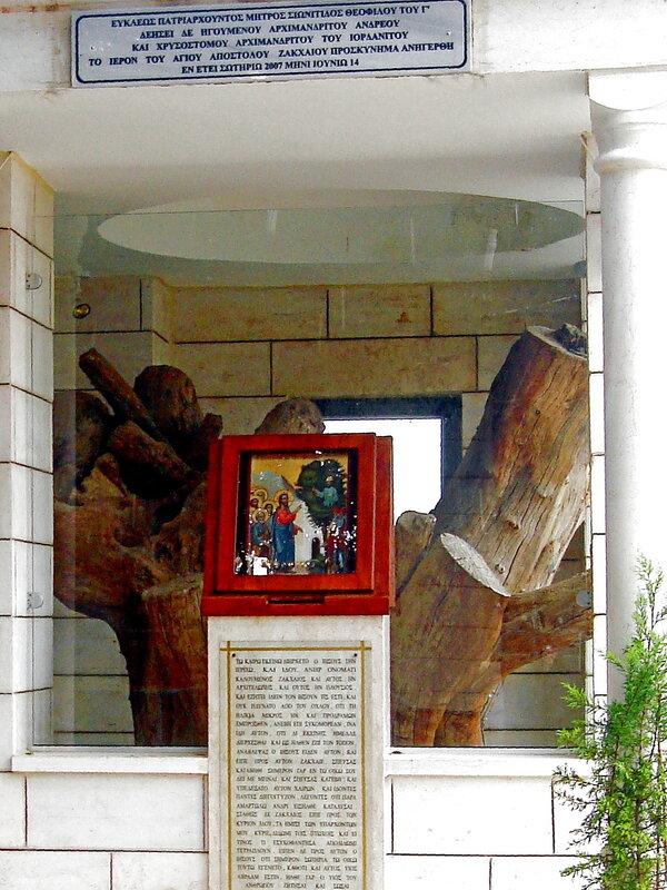 Святая Земля,Иерихон,дерево Закхея