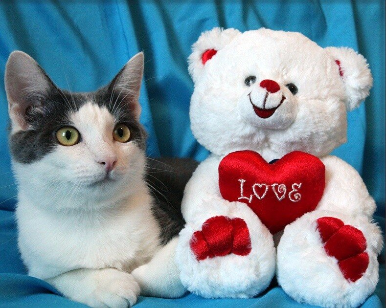 Открытка к дню святого валентина с кошками