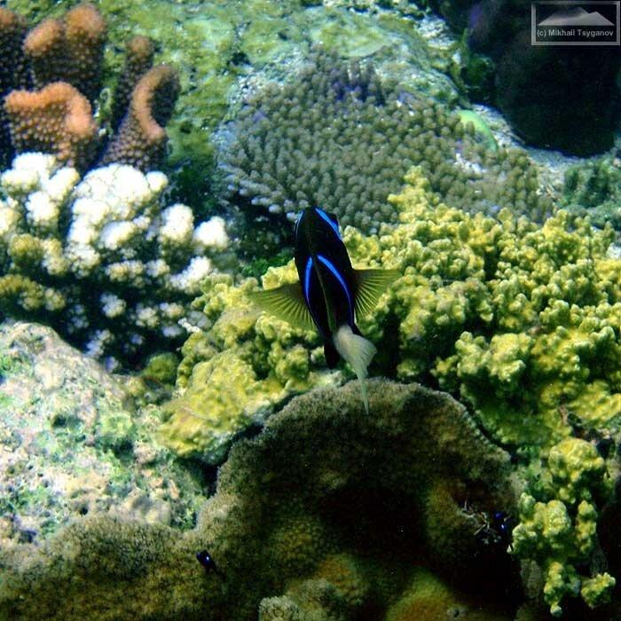 Рыбы у Биака